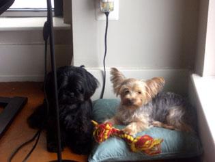 Cookie & Sol
